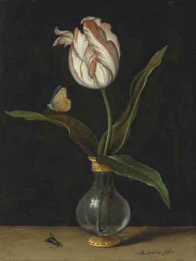 balthasar_van_der_ast_the_zomerschoon_tulip_d6048390g